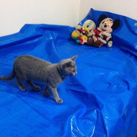 猫の粗相 羽毛布団にオシッコをする猫の対処法