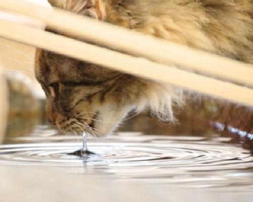 猫と熱中症,猫と水分補給