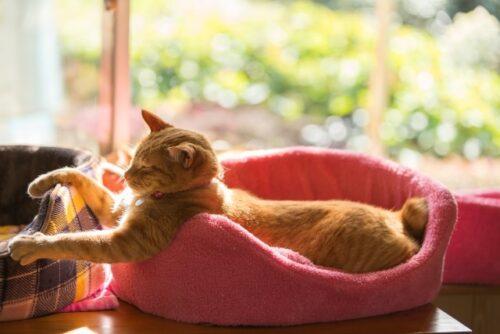 家猫 家に猫がいますカード